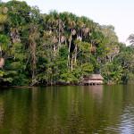 Fabulosos Bosques en el Perú
