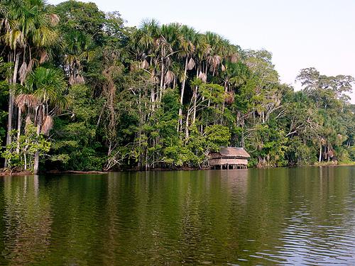 Bosques en Peru