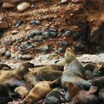 Ecoturismo en Perú, visitar naturaleza en Nazca