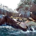 Paracas, famoso balneario en Pisco