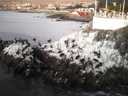 Gaviotas en la Rotonda Jose Galvez