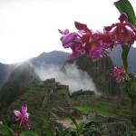 Conocer las orquideas de Machu Picchu