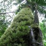 El Bosque Protegido de Pui Pui, en Junín