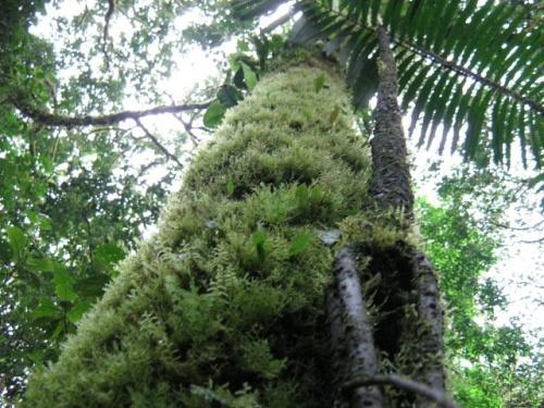 Bosque Protegido de Pui Pui