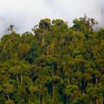 Naturaleza en el Bosque Protegido de Alto Mayo