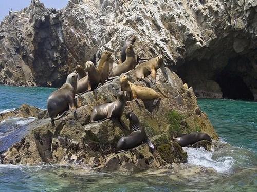 Isla San Gallan