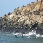 Islas Palomino, excursión desde Lima