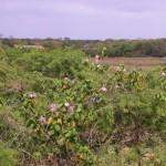 Provincia de Zarumilla, sus playas y su gente