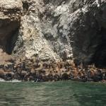 Islas Ballestas, diversidad y proteccion natural