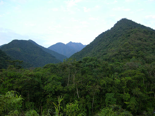 Bosque Nublado de Manu