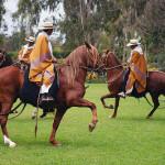 Caballos Peruanos de Paso, un orgullo nacional