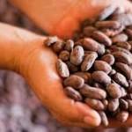 El fino chocolate peruano