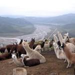 Callalli, la capital alpaquera de Arequipa