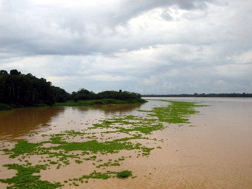 El rio Purus
