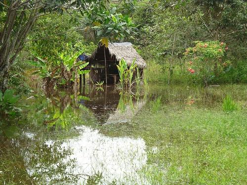 Paisaje del Amazonas