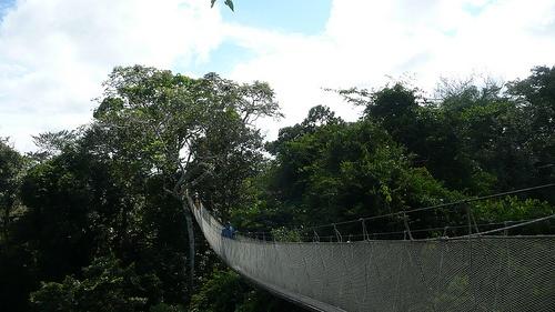 Puentes colgantes en el Amazonas