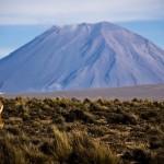 Escalar los dos volcanes de Arequipa