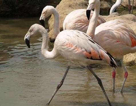 Zoológico Huachipa